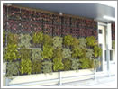 Wall surface tree planting image photograph 2