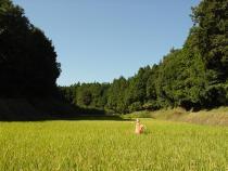 Fotografia de Tando e a floresta de aldeia