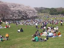 Fotografia do parque onde há vária recreação