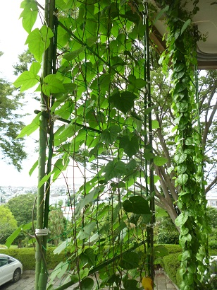 Fotografía de la cortina verde del edificio principal