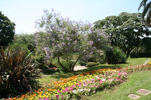 El barrio de) Fujimi abren espacio dónde florece .... de este lado, la flor de la flor llena de colores