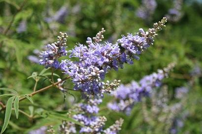 Fotografía de la flor de la púrpura ligera