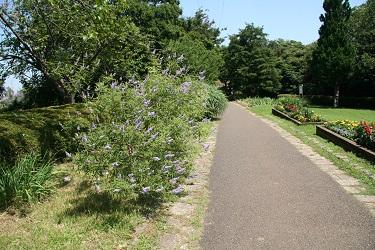 Fotografía de la flor purpúrea
