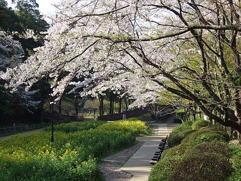 Fotografía del jardín de la flor