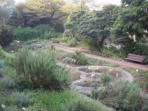 Fotografía del jardín de la hierba