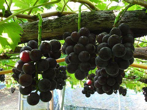 Fotografía del árbol de fruta