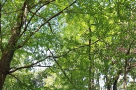 La fotografía del bosque en el jardín