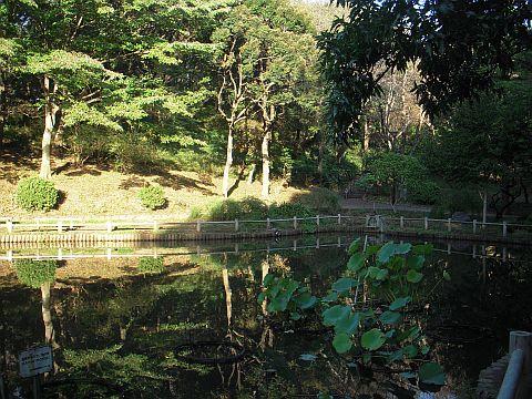 Fotografía del estanque