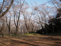 La fotografía de las lozanías de la cereza abre el espacio