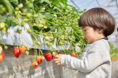 Crop experience farm