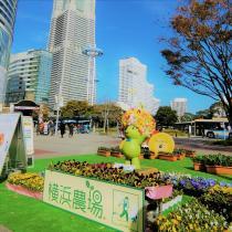 Yokohama cultivan el evento