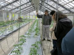 Photograph of visit to greenhouse of tomato