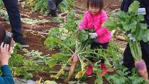 Fotografía de la cosecha de Karibe la experiencia de los rábanos japonesa