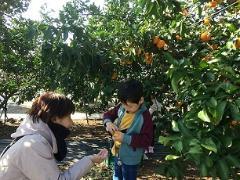Fotografía del naranja escoger mandarino
