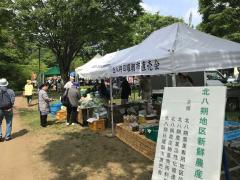 Image of green Festa