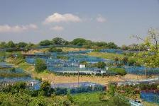 Field of village of shiba seaside blessing
