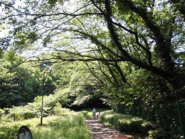녹도·산책길의 이미지