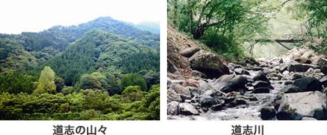 도시의 산들, 도우시강