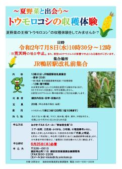 Harvest of corn experience flyer meeting vegetables in the summer