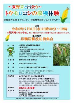 夏天遇見蔬菜的玉米的收獲經驗傳單