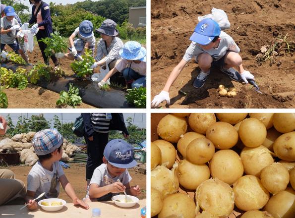 부모와 자식으로 감자 파기 체험
