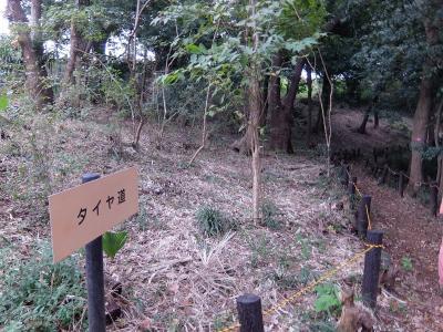 숲 산책 이벤트의 모습 2