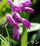 """區的花""""硅烷""""的照片"""