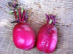 胭脂紅kururi