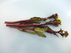胭脂紅菜青苔(請求,痛)
