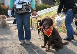 Image of doggy patrol