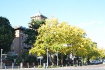 Photograph 4 of ginkgo of November 7