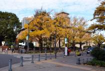 Photograph 2 of ginkgo of December 5