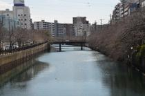 Photograph 2 of cherry blossoms of great Okagawa of March 17, 2020