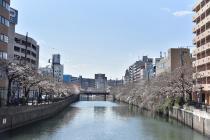Fotografía 1 de lozanías de la cereza de gran Okagawa del 23 de marzo de 2021