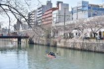 Fotografía 2 de lozanías de la cereza de gran Okagawa del 23 de marzo de 2021
