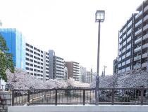 Fotografía 1 de lozanías de la cereza de gran Okagawa del 26 de marzo de 2021