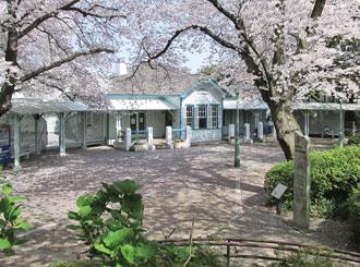 本牧山山頂公共園櫻花