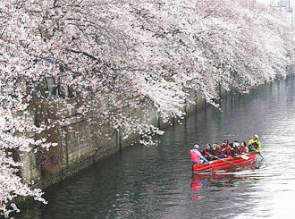 大岡河櫻花節