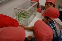 Niños que observan el killifish del Yokohama