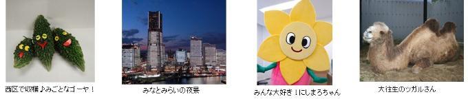 Image of photomosaic application image