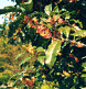西區的樹mokuseino圖片
