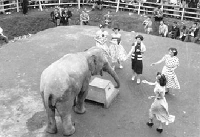 野毛山動物園的象的哈馬共no照片