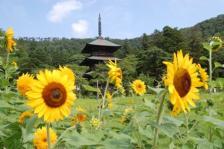 Akutsu Yahata Shrine Mie tower