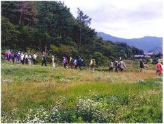 Village forest walk