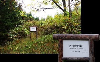 .... el bosque