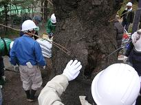 Treatment of trunk