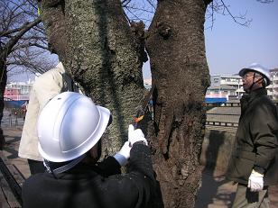 The pruning of unnecessary branch