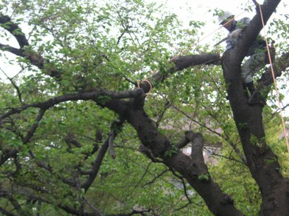 State of the branch choice of high place