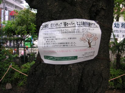 Notice of signboard during growing power of a tree recovery