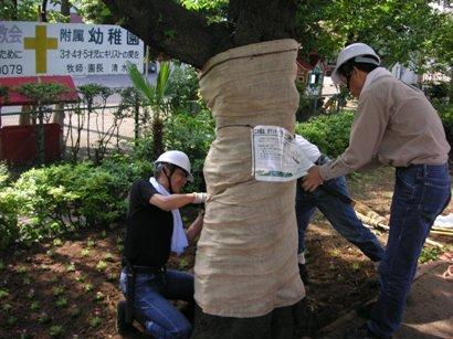 Tree planting tape roll